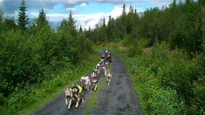 Sled_dog_try-outs