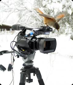 lavskrika-kamera