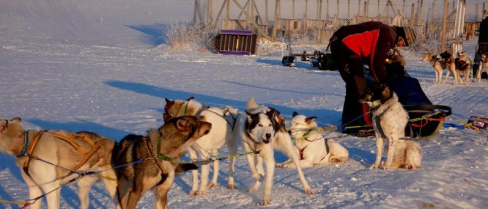 Husky tour and the magic of Norway